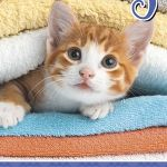 Biscay Diary Kittens Month To View Odd Year | 61-378828
